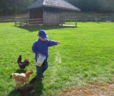 La Granja. Farm